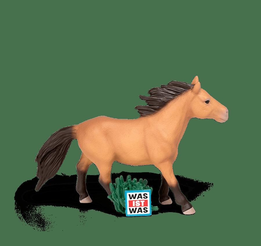 wunderbare Pferde